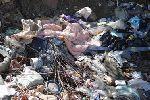 В Краснодарском крае обнаружена свалка биологических отходов