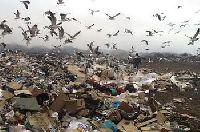 В Калининградской области обнаружена свалка биологических отходов