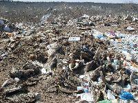 Несанкционированную свалку с останками крупного рогатого скота нашли на окраине Омска